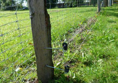 Zusätzlich außerhalb angebrachte Elektrolitzen an Wildgehegen